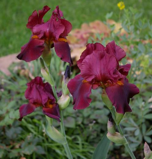 Прайс-листы на цветы ирисы в г. перми 14