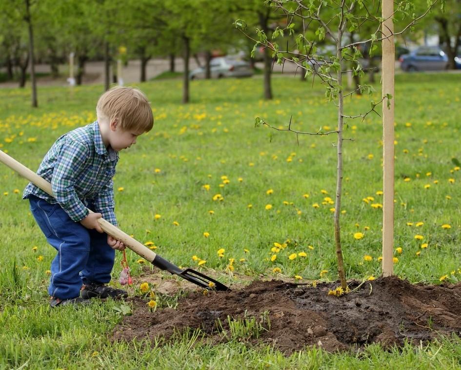 Картинки о посадке деревьев, девушками